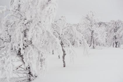 Laxfjället i januari